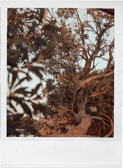 Bushlands-image