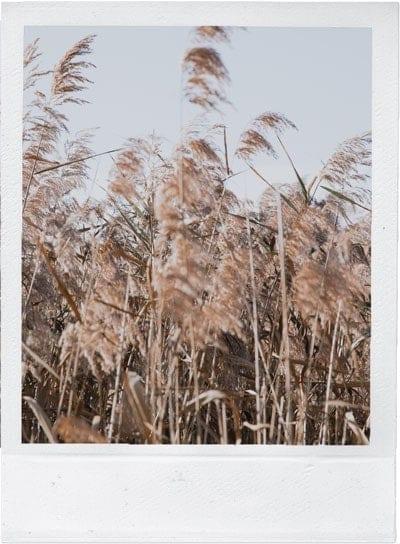 Grass-Fields-image